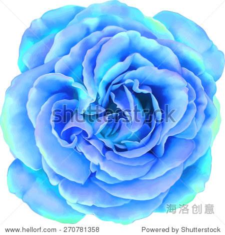 美丽的淡蓝色的玫瑰花孤立在白色背景.矢量图