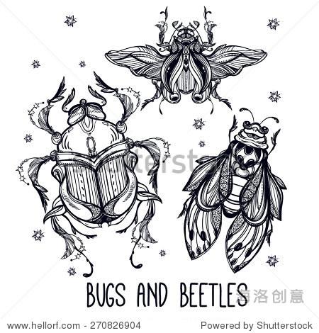 漂亮的手绘古董昆虫甲虫.古典风格的纹身向量.版画在.