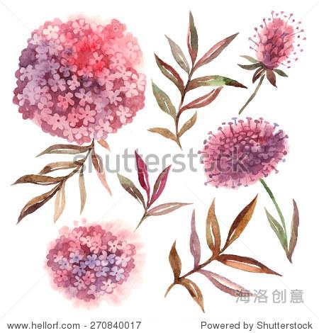 水彩花卉.收集叶子和花