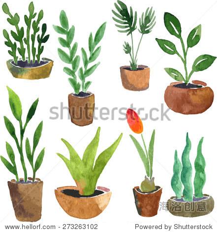 水彩绘画家里植物,手绘矢量插图