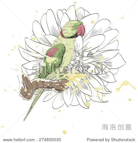 只鹦鹉.手绘插图