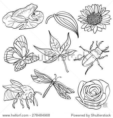 昆虫和植物