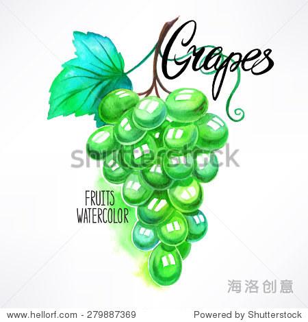 美丽的水彩画葡萄串.手绘插图