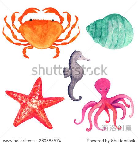 水彩海洋动物,螃蟹,海星,壳牌,章鱼,海马特写孤立在白色背景.
