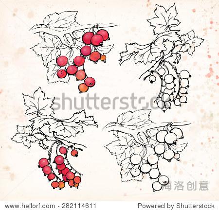 浆果用树叶和树枝 黑色钢笔画画的米色背景 矢量插图 食品及饮料,