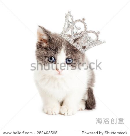 可爱的小五周大小猫戴着莱茵石公主皇冠