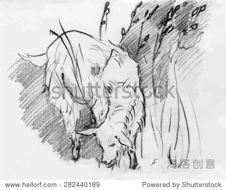 铅笔画画 - 动物/野生生物,自然 - 站酷海洛
