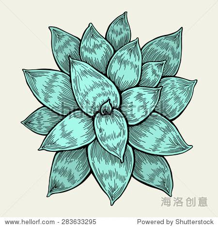 热带岛屿丛林植物隔离,俯视图.手绘艺术作品.网站模板