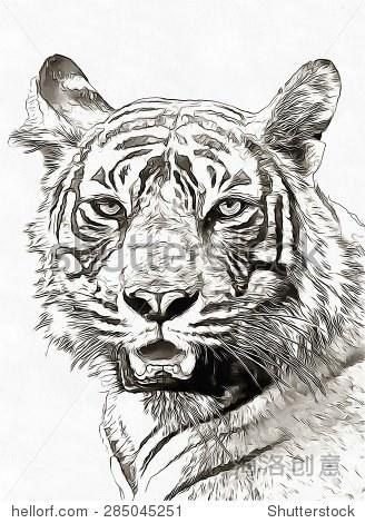 素描铅笔飞行鸟/白色 - 动物/野生生物,物体 - 站酷