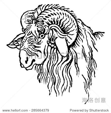 盘羊头,古典雕刻插图.自然历史的动物,1880.