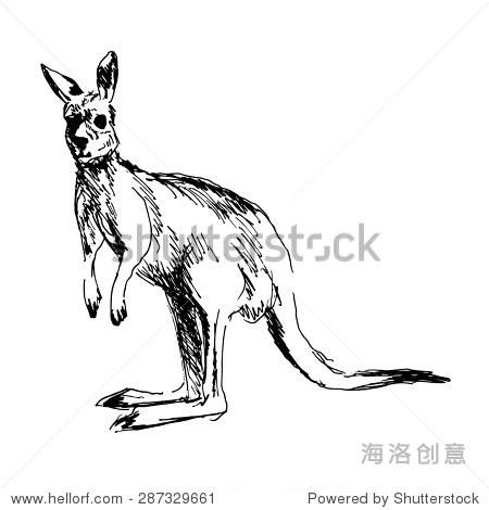 手绘的袋鼠 - 动物/野生生物