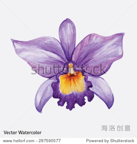 水彩热带兰花的花.矢量插图.