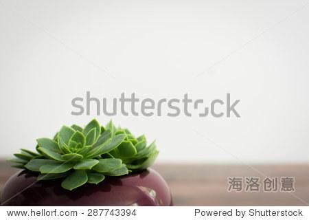 三个小肉质植物在一锅木制背景.北欧风格的室内装饰图片