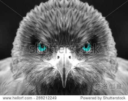 蓝眼睛的鹰,黑白风格-动物/野生生物-站酷海洛创意,,.