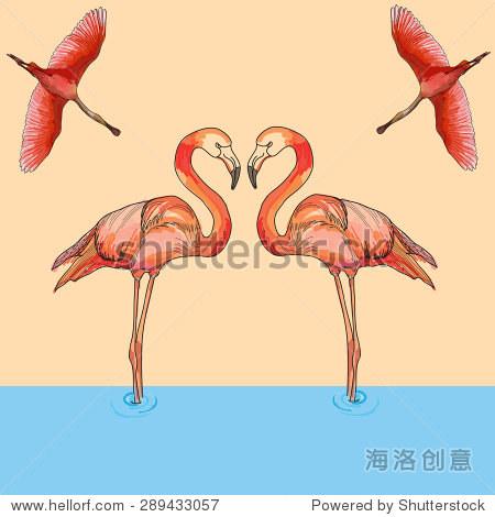 爱的矢量插图粉红色的火烈鸟在飞行和水.手绘-动物