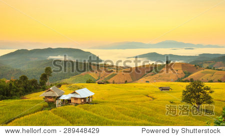 ��in9l$yi��d#9.�_sunrise at terraced paddy field in mae-jam village chiang mai