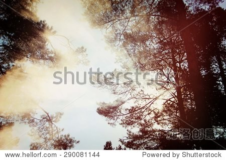 高大的树木和树枝和树叶太阳光照射穿过树叶的皇冠,黑暗的过滤器