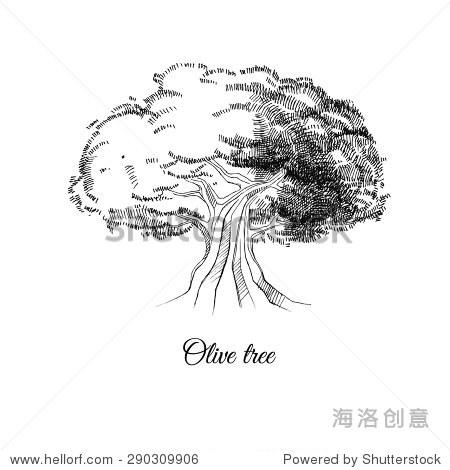 橄榄树,矢量手绘草图,黑白图像