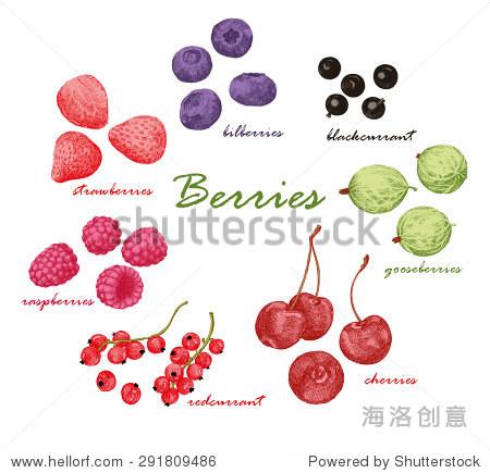 彩色手绘图形的浆果.草莓,树莓,醋栗,樱桃,越橘,红和黑醋栗.