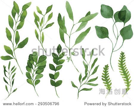 一组向量水彩的树叶和树枝.