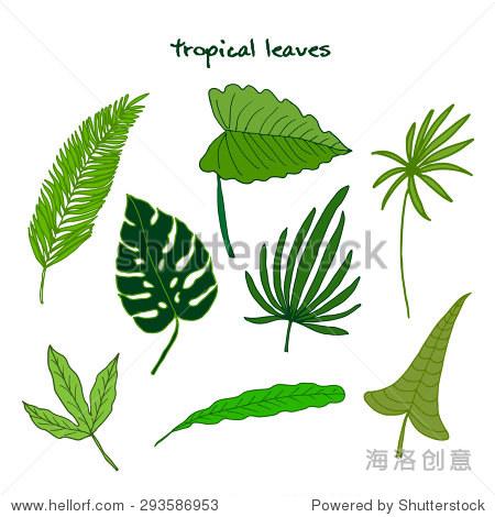 绿色热带落叶.矢量图