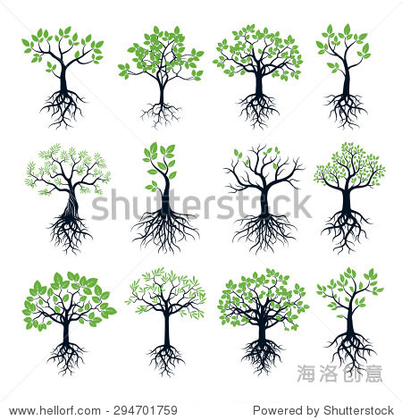 的树木,绿色的树叶和树根