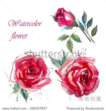 鲜花玫瑰用树叶,水彩插图
