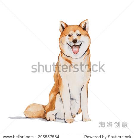秋田犬,水彩画 - 动物/野生生物,抽象 - 站酷海洛创意