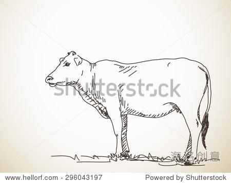 素描的牛,手绘矢量插图