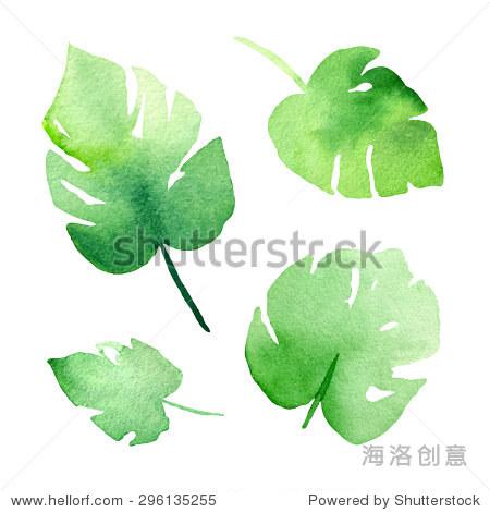 手画抽象水彩画蓬莱蕉植物的叶子.