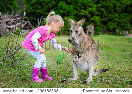 小女孩玩袋鼠在动物园