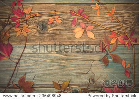 植物标本.秋天静物干红色植物的叶子和树枝旧板的变形