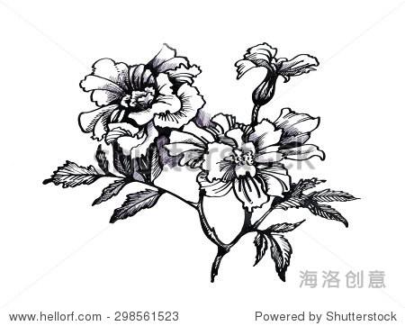 素描画图片大全花朵-Black and white sketch with Painting Beautiful 图片