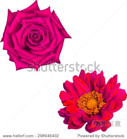 粉色红玫瑰和大丽花孤立在白色背景.矢量图