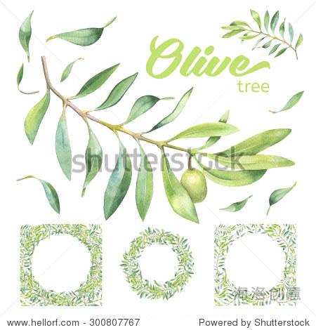绿色水彩橄榄枝,叶子,白色背景帧-艺术,自然-站酷海洛图片