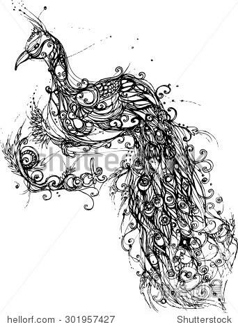 手绘的孔雀
