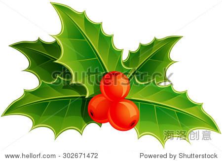 冬青树叶和浆果.矢量插图.