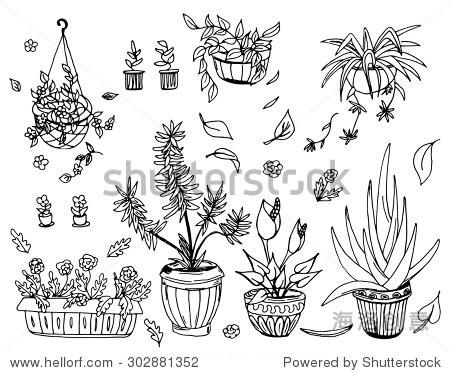 盆栽植物,矢量插图,手绘设计元素. - 物体,自然 - ,,.