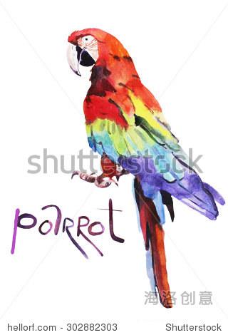 水彩插图,鹦鹉,手绘孤立在白色背景 - 动物/野生生物