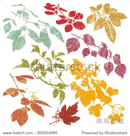 秋天树叶和树枝——轮廓与叶静脉纹理,孤立在白色背景