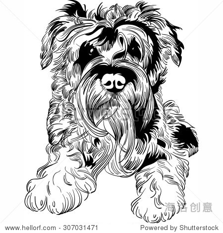 可爱的迷你雪纳瑞狗品种手绘向量-动物/野生生物
