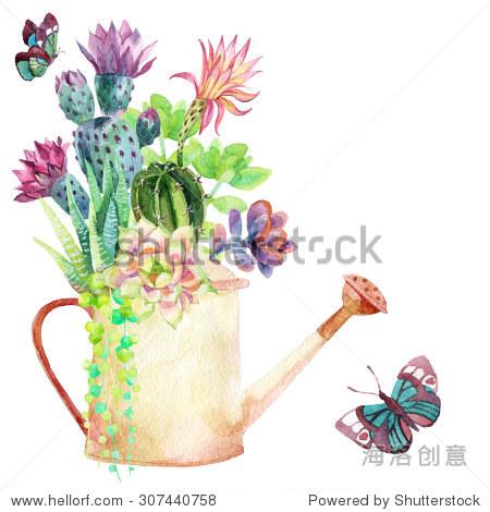 水彩肉质植物,喷壶和蝴蝶.手绘插图