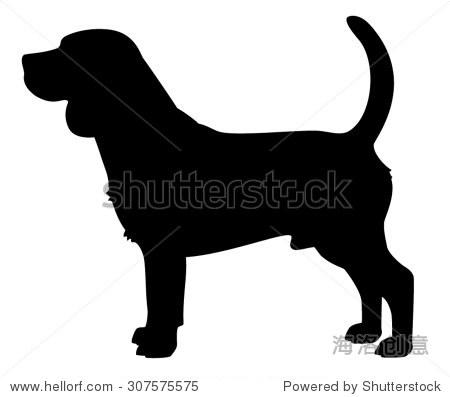 小猎犬纯种狗站在侧面,矢量剪影孤立 - 动物/野生生物