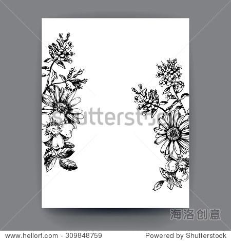 刻手绘插图的洋甘菊,玫瑰果,百里香.花蕾,叶子和茎.