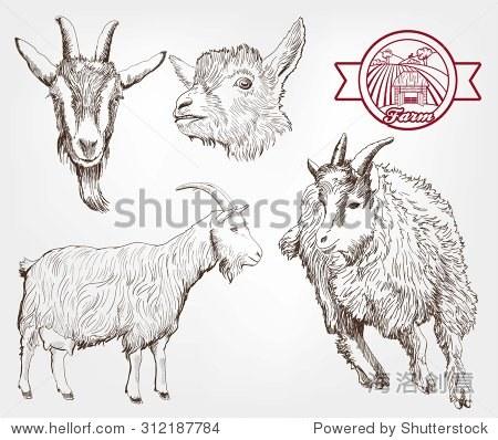 山羊繁殖.手工制作的素描