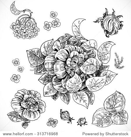 黑白画幻想花朵和叶子图形元素设计