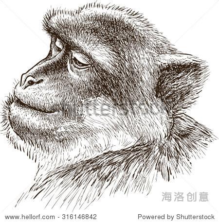 素描猴子步骤图