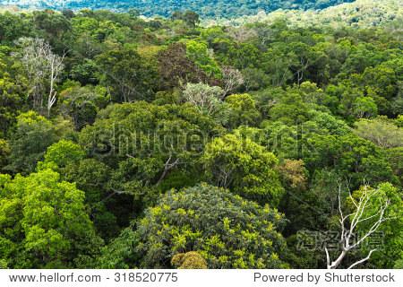 在巴西亚马逊森林