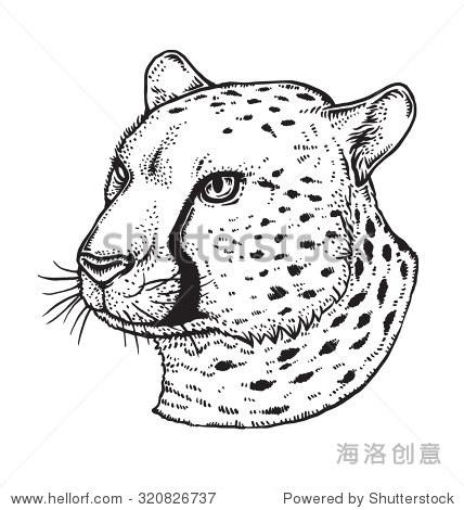 猎豹的脸-动物/野生生物,其它-站酷海洛创意正版图片