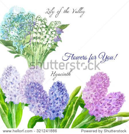 春天的花.手绘水彩插图植物元素.风信子,莉莉的山谷